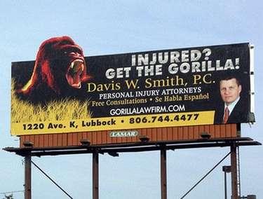 The gorilla lawyer